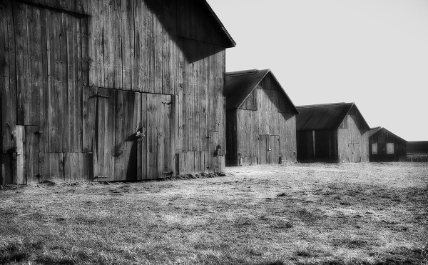 Tobacco Barn 1