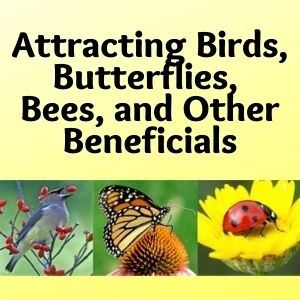 Attracting Birds, Butterflies, and Other Beneficials